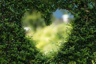 A través del corazón