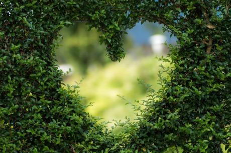 A través del corazón (Foto de Pixabay))